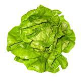 Salat Kopfsalat