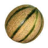 "Melone "" Cantaloupe"""