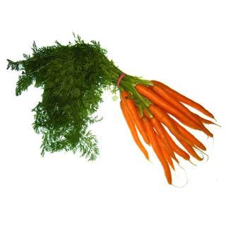 Karotten im Bund regional