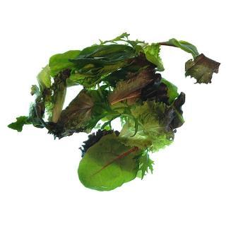 Salat Asia-Salat regional