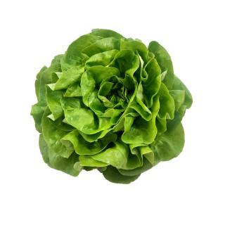 Salat Kopfsalat regional