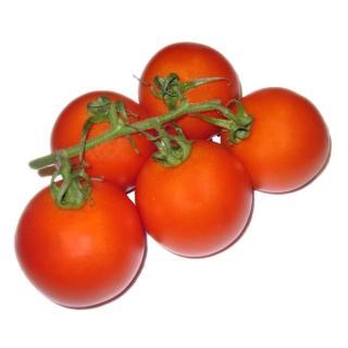 Tomate Strauchtomaten
