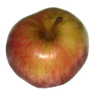 "Apfel  "" Jonagold """
