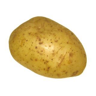 Kartoffeln Agria vorwiegend festkochend