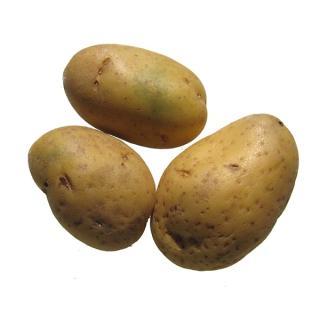 Kartoffeln Ditta festkochend